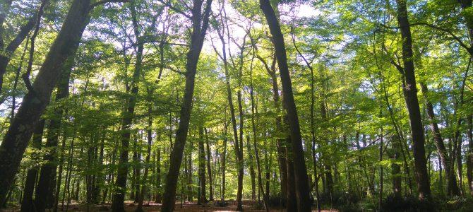 Assemblée Générale Forêts Sans Age
