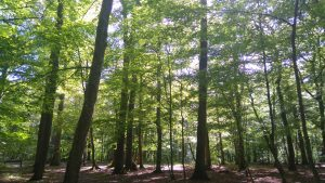 Forêts Sans Age
