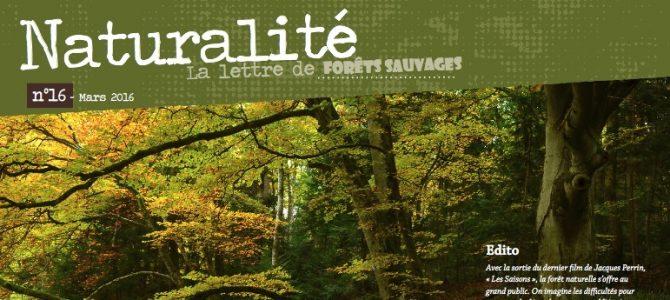 Parution du N° 16 de Naturalité, la lettre de Forêts Sauvages