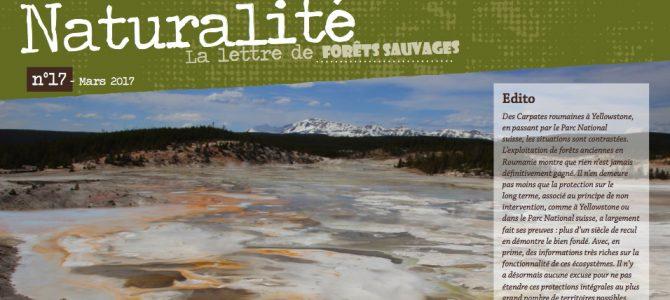 Parution du n°17 de Naturalité, la lettre de Forêts Sauvages