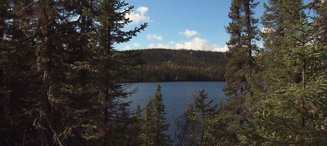Les forêts boréales reculent à vue d'oeil