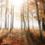 Mobilisation de fonds pour acquérir 40 ha de Forêt à Rochechouart